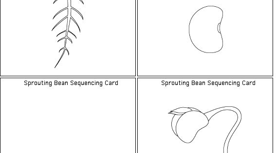 Bean plant, Life cycles and Plants on Pinterest