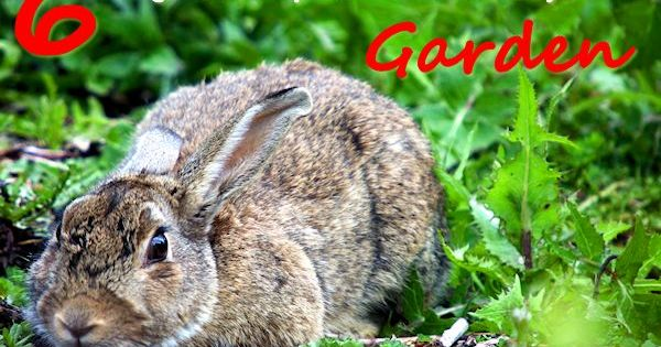 6 ways to keep critters out of your garden if the animals and insects are invading your garden - Garden ideas to keep animals out ...