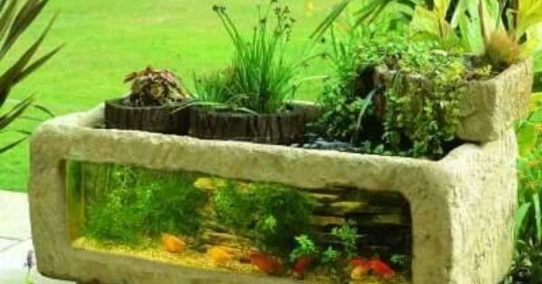 Above ground goldfish pond ponds pinterest fish for Outdoor goldfish for sale