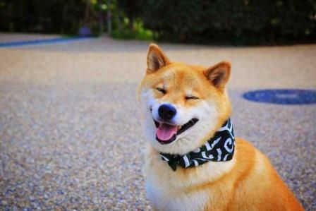 ボード Articulos Sobre Perros のピン