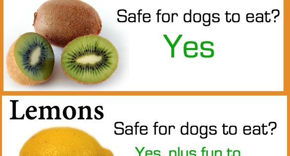Handy Chart Of The Day Which Fruits Are Safe For Your Dog