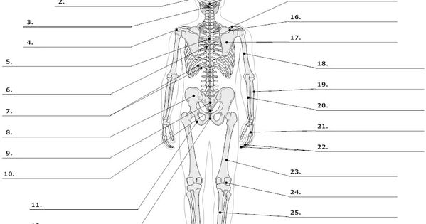 Anatomy Labeling Worksheets Google Search I Heart