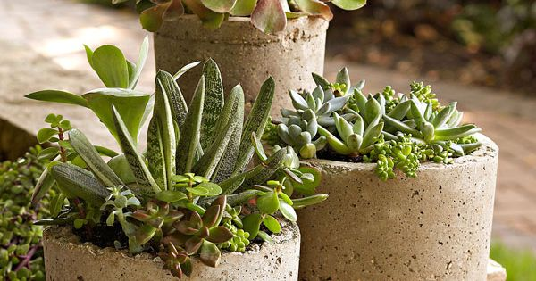 Three hypertufa pots... cement pots