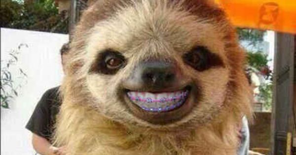This sloth. | 14 Animals With Braces That Will Make You ...