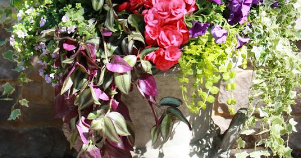 flores del sol: summer container plantings