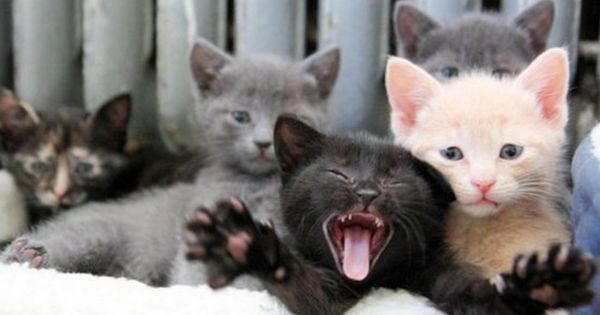 There Is Always One Kid In Every Group That Ruins The Photo For The Rest Of The Group Kittens Crazy Cats Pretty Cats