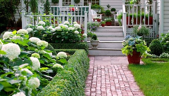 hydrangeas and boxwood- landscaping front of house can we grow boxwood in
