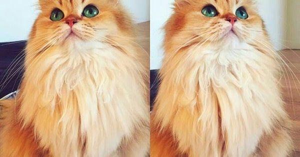جديد صور قطط أليفة شكلها جميل وحلوين جدا أجمل صور قطط جميلة جدا 2017 أحلي صور قطط مثل العسل صور قطة حلوه جدا للفيسبوك لكل محبي صو Cat Pics Cats Cute Pictures