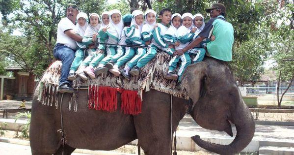 Info Tiket Kebun Binatang Bandung