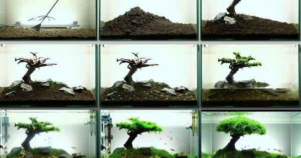 aquarium einrichten schritt f r schritt anleitung pet aquarium pinterest aquariums. Black Bedroom Furniture Sets. Home Design Ideas