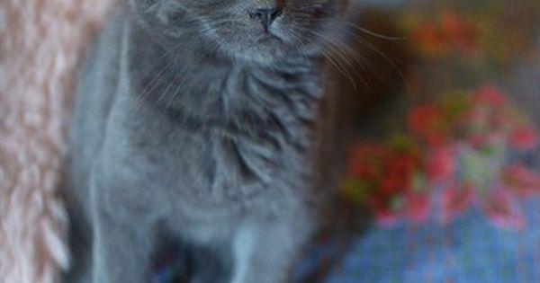 Grey cats! Love!