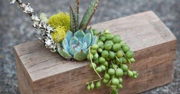 Plantes Succulentes Id Es D 39 Arrangement Lieux Et Marque Place