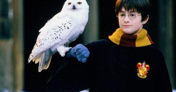 Harry Potter Und Der Stein Der Weisen Filmkritik Film Tv Spielfilm Harry Potter Film Stein Der Weisen Harry Potter Bildschirmhintergrund