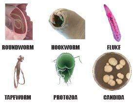 Pinworms protozoa, Giardia parasite symptoms in humans - Protozoa giardia in humans