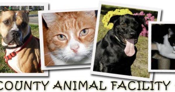 Get To Know Ocean County Animal Facility South Animal Shelter Animals Ocean