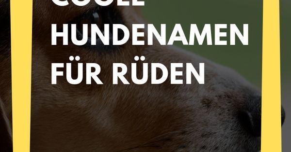 159 Male Dog Names For Males Dog Hundenamen Male Males