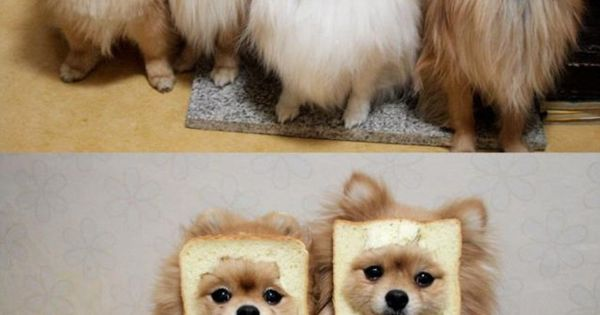 What in the World? Did we really need the closeup shot, too? In-bred dogs?