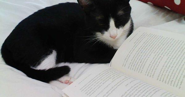 essay on hobby of reading books