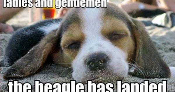 Need A Pick Me Up New Funny Photo Thread Cute Beagles Beagle