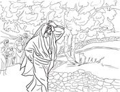 Jesus Curses The Fig Tree Coloring Page Tree Coloring Page