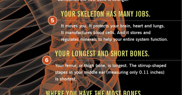 13 strange and interesting facts you need to know about your BONES.