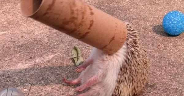 I love a good picture of a hedgehog with a toilet paper