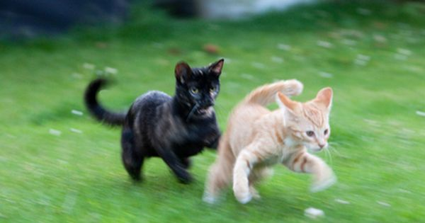 Overjoyed Feral Kittens Reunite After Release From Trap Feral