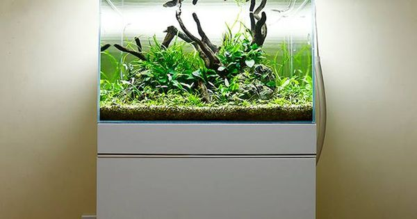 Aquascape by george farmer uk pin by aqua poolkoh - Petit aquarium design ...