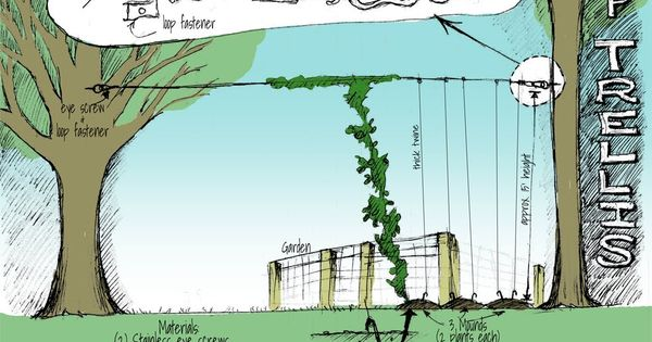 create a hops trellis between two trees