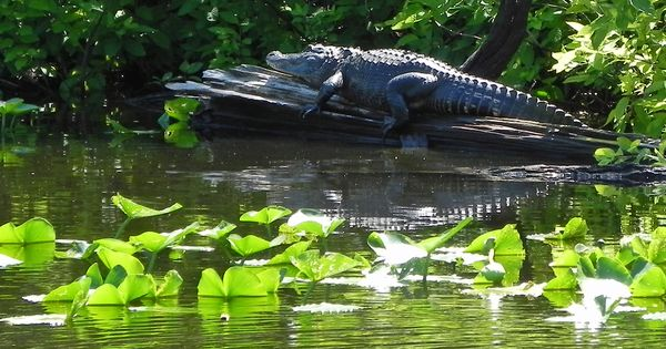 florida gators memorial day hats
