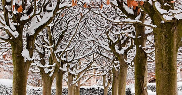 Snowy Avenue, Botanic Garden, Oxford, England--It's good, quiet beauty