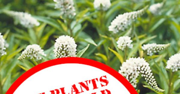The Invasive Plants You Should NEVER Grow! ...since I am about to
