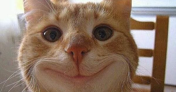 Funny Smile Cat Smiling Animals Funny Animals Cats