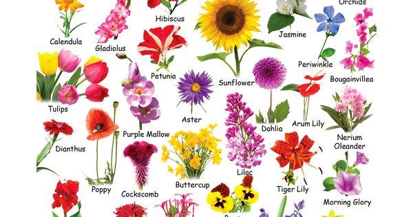 Flower chart each flower speaks for itself description - Clase de flores y sus nombres ...