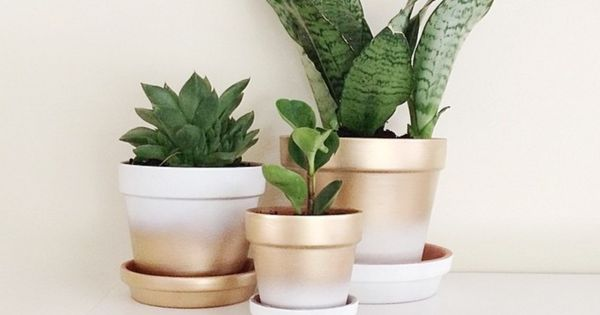 Search Results For Spray Paint Makeovers On Instagram Domino Painted Pots Diy Diy Spray Paint Plant Pot Diy
