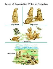 Levels Of Organization Within An Ecosystem Handouts Reference