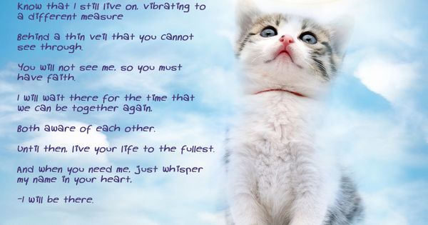 Cat's prayer for grieving humans | bedroom decor ...