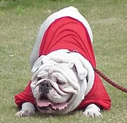 University Of Georgia Mascot Uga