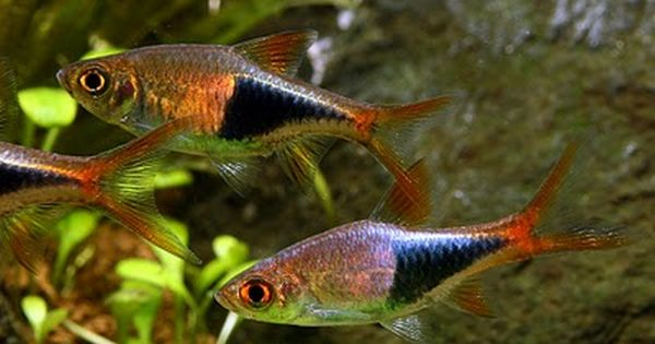 For the middle of the tank get some schooling fish 5 or for Freshwater schooling fish