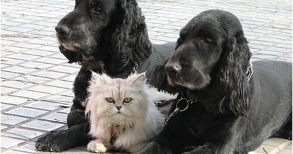 The Cat Is Between The Two Dogs Photos For Teaching Spacial Concepts Pinned By Pediastaff 8211 Please Visit Ht Ly Animals Dog Friends Animals Beautiful