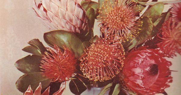||Rose garden Rose flowers Roses| http://roseflowergardens.blogspot.com