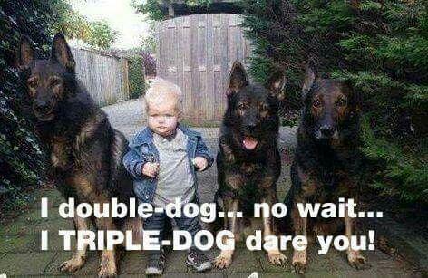 Because One German Shepherd Is Not Enough Schaferhunde Deutsch Schaferhunde Und Hunde