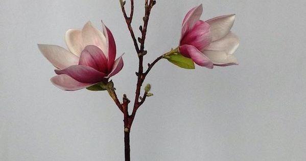 Diy Celfie Vase Project Floral Branch Magnolia Flower Flower Branch