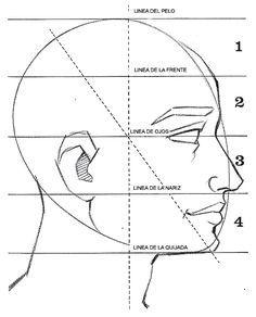 Proporciones De La Cabeza Vista De Perfil Como Dibujar Aprender A Dibujar Rostros Como Dibujar Retratos
