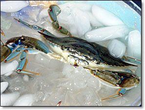 Bluecrab Info Clean Before You Cook Blue Crab Recipes Crab Recipes Cooking Crab