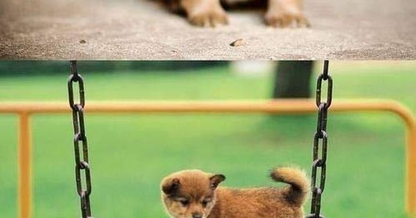 cuteness overload >> for when I am having a bad day