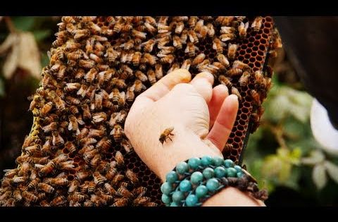 a study of the importance of bees The importance of the symbiotic relationship of the bee that study alone shows that at least two bees play such an important role that their future may be.