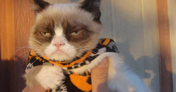 I went trick or treating once, it was terrible GrumpyCat Photos