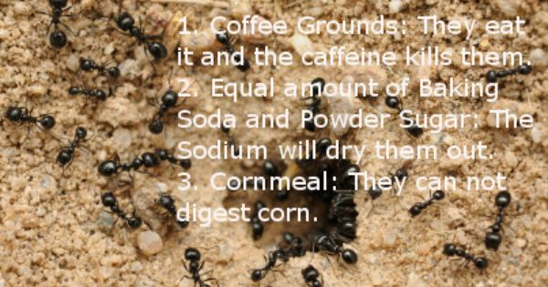Ants Safely 1 Coffee Grounds