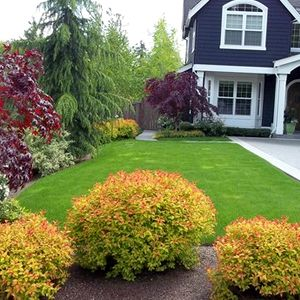 Magic Carpet Spirea Shrubs Butterfly Attracting